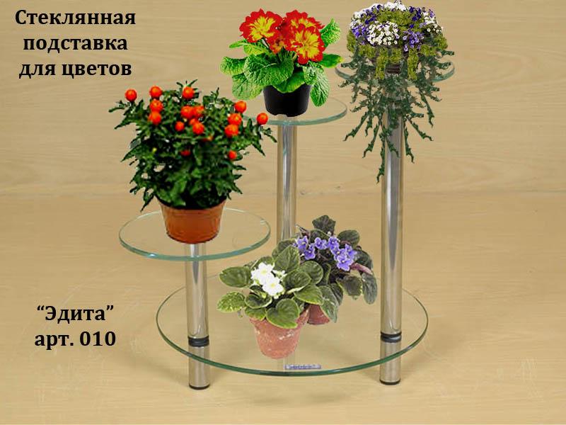 цветок пеларгония фото уход в домашних условиях размножение