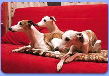 Диваны для собак