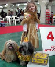 Выставки для собак