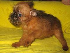 Подушки для щенков
