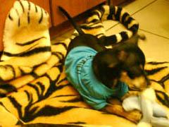 Подушка для собак